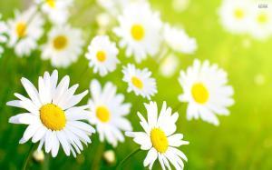 springflowers (1)